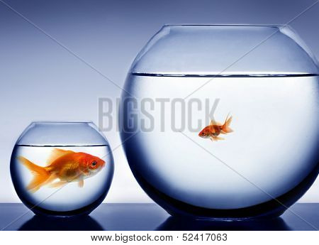Studio shot of a fish in bowl