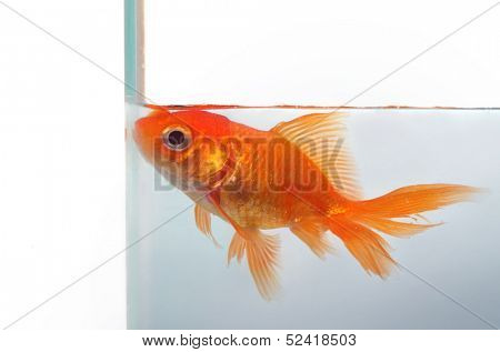 Goldfish wants more space