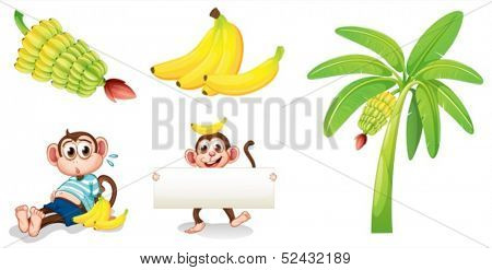 Illustration of the bananas and monkeys with an empty signboard on a white background