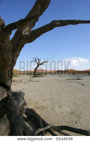 Tree In Deadvlei