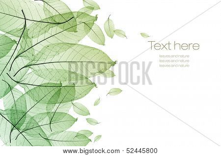 color leaf isolated
