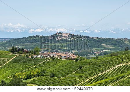 Langhe, Vineyards