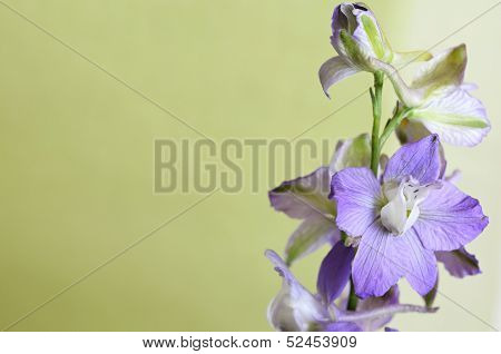 Delphinium On A Green Background