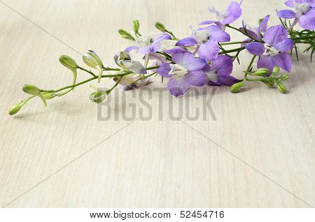 Delphinium On A Wooden Background