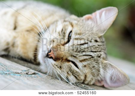 Young Cat Lying on a board