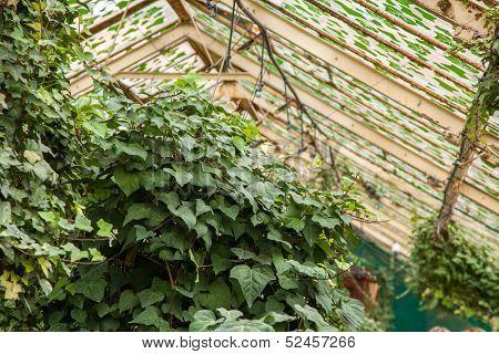 Hothouse in a botanical garden