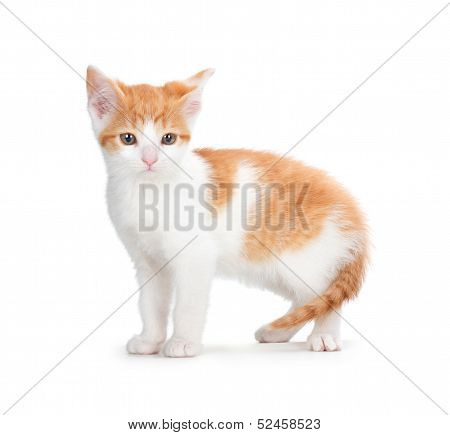 Cute Orange Kitten On A White Background