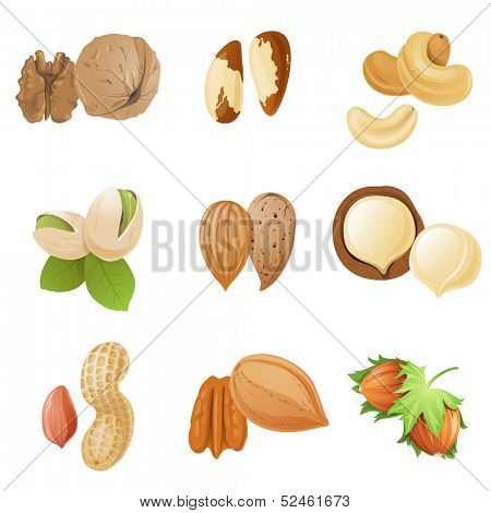9 highly detailed nut icons
