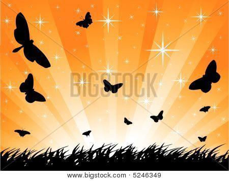 Butterfly starburst