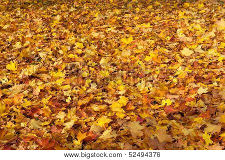 Colorful autumn leaves, colorful background of autumn leaves, autumn leaves background, multicolour