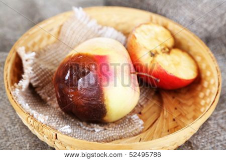 Rotten apples in basket on sackcloth