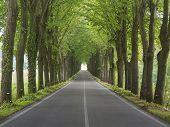 stock photo of row trees  - Tree lined country road in the shape of a green tunnel - JPG