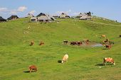 stock photo of velika  - Alpine pasture  - JPG