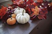 picture of gourds  - autumn still life with pumpkins and leaves - JPG