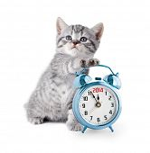 stock photo of lovable  - british kitten with alarm clock displaying 2014 - JPG