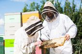 Beekeepers in protective workwear inspecting honeycomb frame at apiary