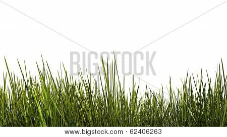 Tall Grass Close Up