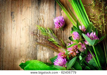 Herbs over Wooden background. Grass on wood. Treatment Plant. Herbal Medicine. Spring Herbal Background.