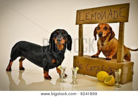dog lemonade stand