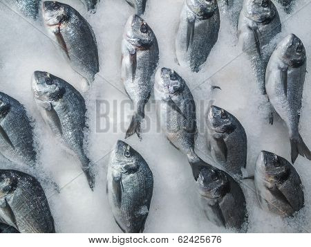Fresh Sea Bream On Counter