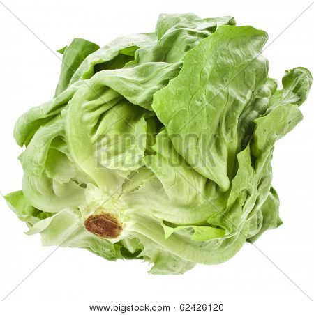 Bunch Head of Fresh Green Salad  Isolated On White Background