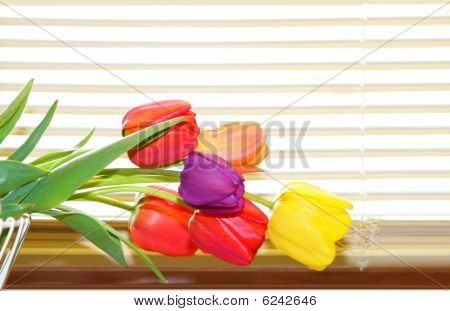 Tulips And Blinds