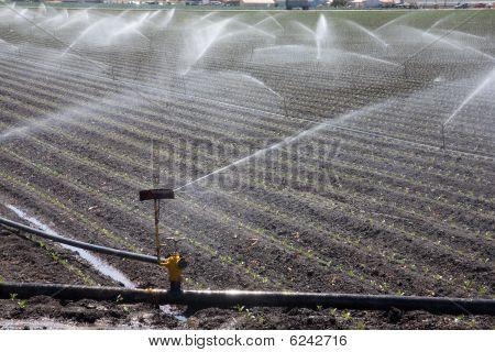 Irrigation Plant