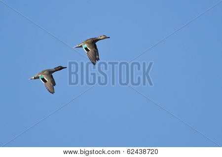Pair Of Green-winged Teals Flying In Blue Sky