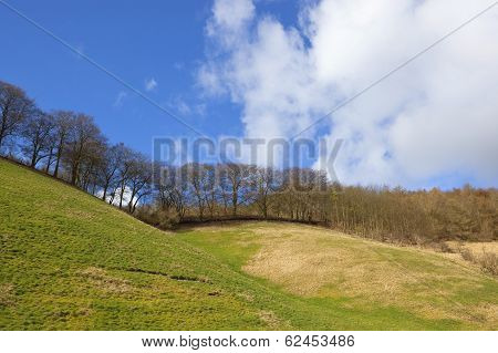 Grassy Hillside With Trees