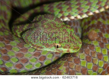 Portrait Of Poisonous Snake