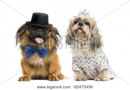 Pekingese with a bow tie and top hat sitting next to a Shih tzu wearing a crown and a shirt