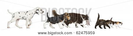 Group of cats and dogs walking