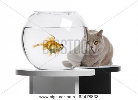 Cat looking at a goldfish in a fish bowl