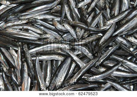 Fresh Small Fish At The Market