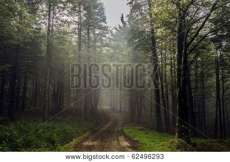 Mystic Road