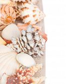 pic of mollusca  - pile of  sea shells with scallop shell in center - JPG