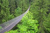 stock photo of suspension  - Capilano suspension bridge - JPG
