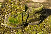 image of discard  - A old discarded work boot partially covered in moss - JPG