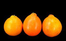 picture of tangelo  - Three Mineola Tangelo  - JPG