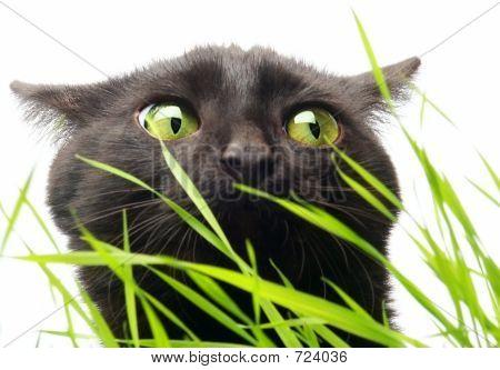 Cat & Grass