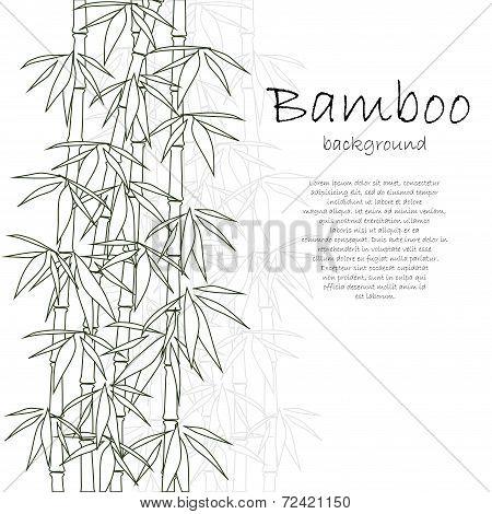 Bamboo background white