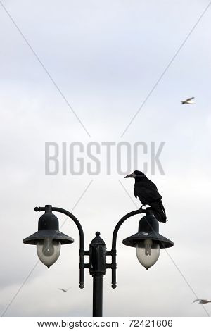 Crow Perched On Top Of Lamp
