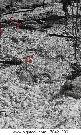 WW1 battlefield with poppies B&W