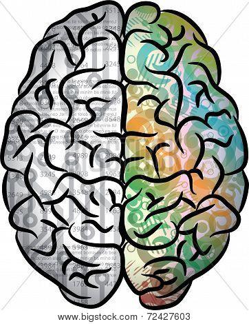 Human brain color