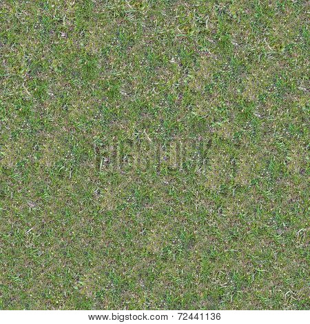 Grassplot with Green and Yellowed Grass.