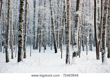 Winter Wood.