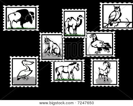 Animals black backgroun