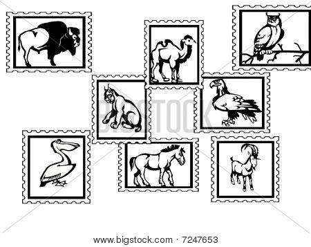 Animals white background