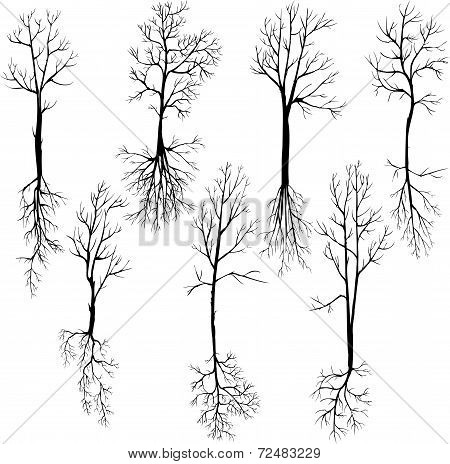 set of different winter trees and roots
