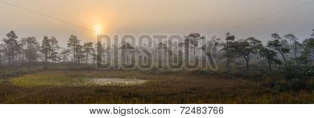 Early morning in bog